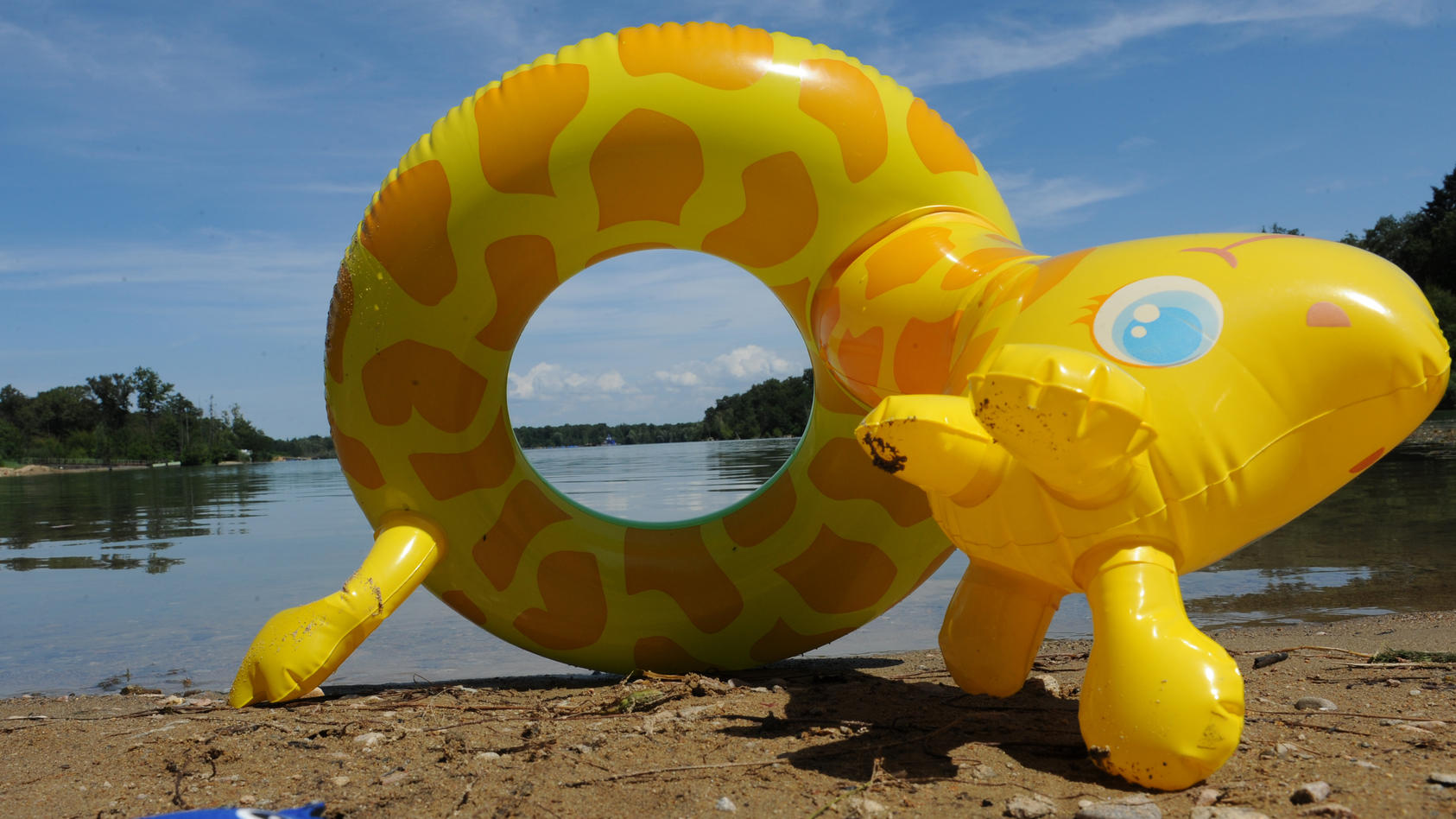 Schwimmtier am Seeufer (Motivbild)