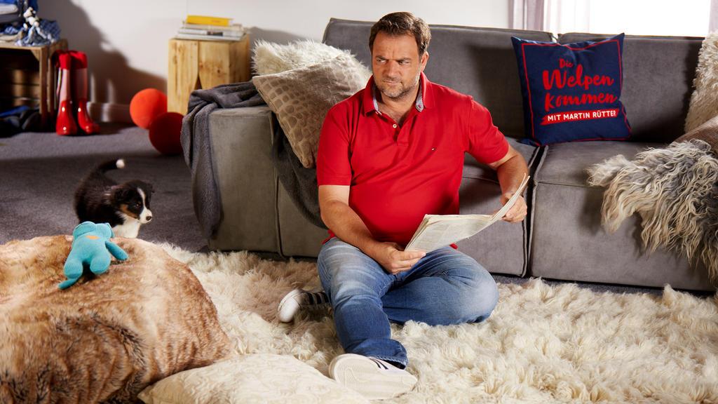 Hundeprofi Martin Rütter sind junge Vierbeiner besonders wichtig.