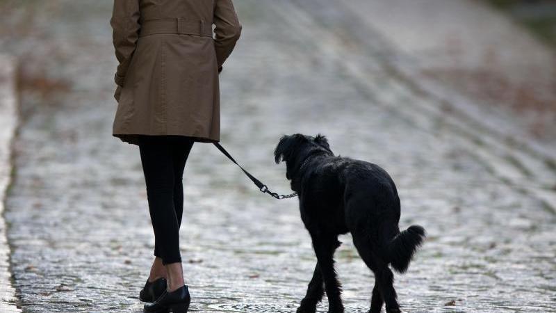 Single mit hund sucht frau