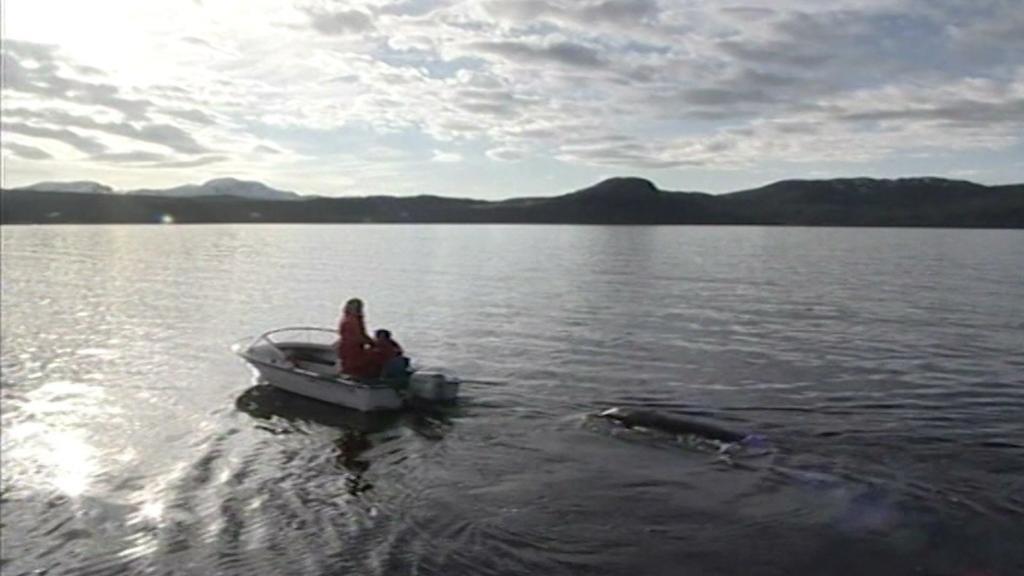 In die Klettsvik-Bucht in Island  werden Wale ausgewildert.