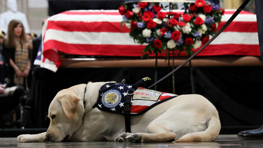 Sully the service dog of former U.S. President George H.W. Bush lays in front of Bush's casket as it lies in state inside the U.S. Capitol Rotunda on Capitol Hill in Washington, U.S., December 4, 2018. REUTERS/Jonathan Ernst     TPX IMAGES OF THE DAY