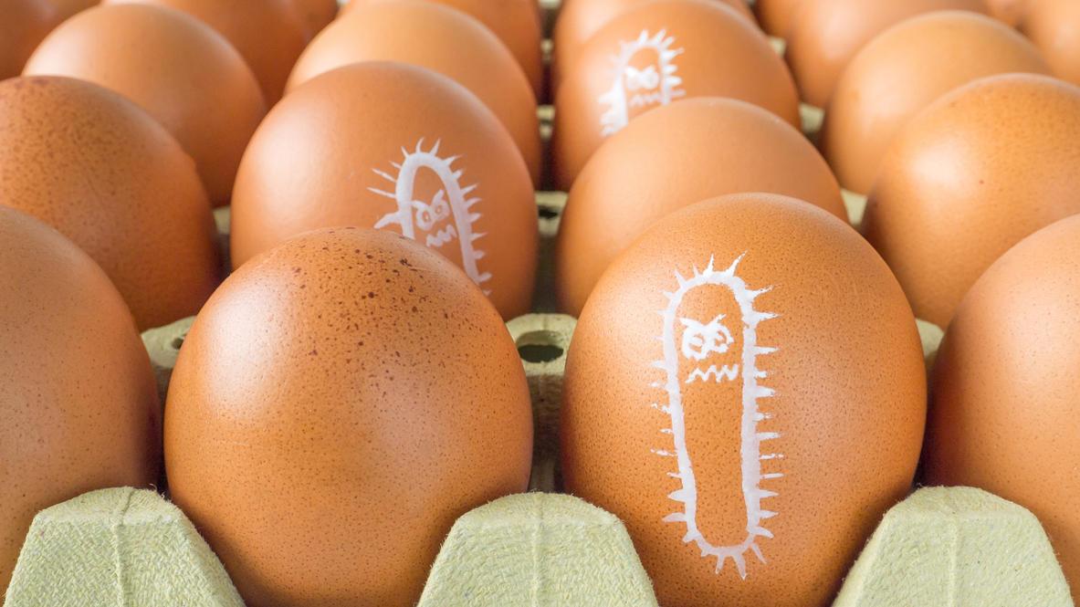 Salmonellen sieht man dem Ei im Alltag nicht an.