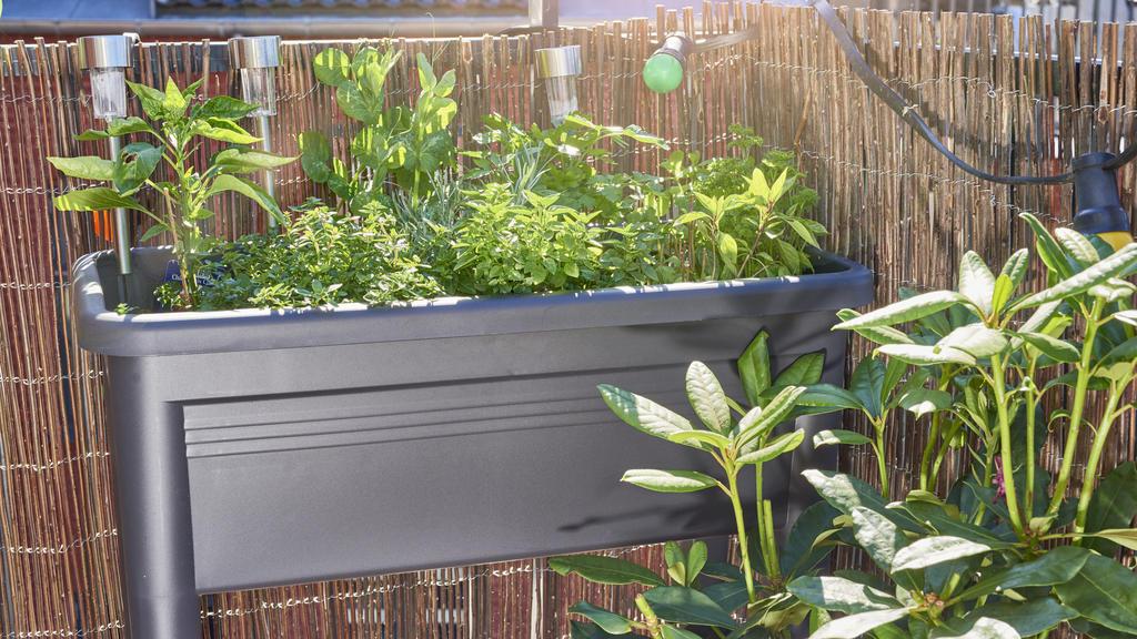 Pflanzen für den Balkon: Mediterrane Kräuter