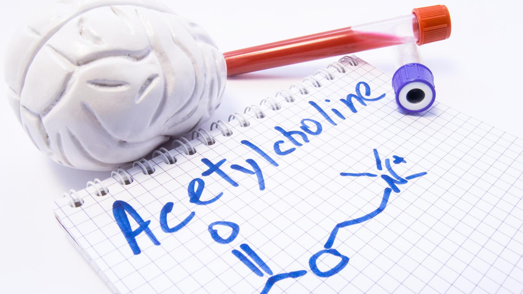 Acetylcholin (ACh) ist einer der wichtigsten Neurotransmitter in vielen Organismen, so auch im Menschen.