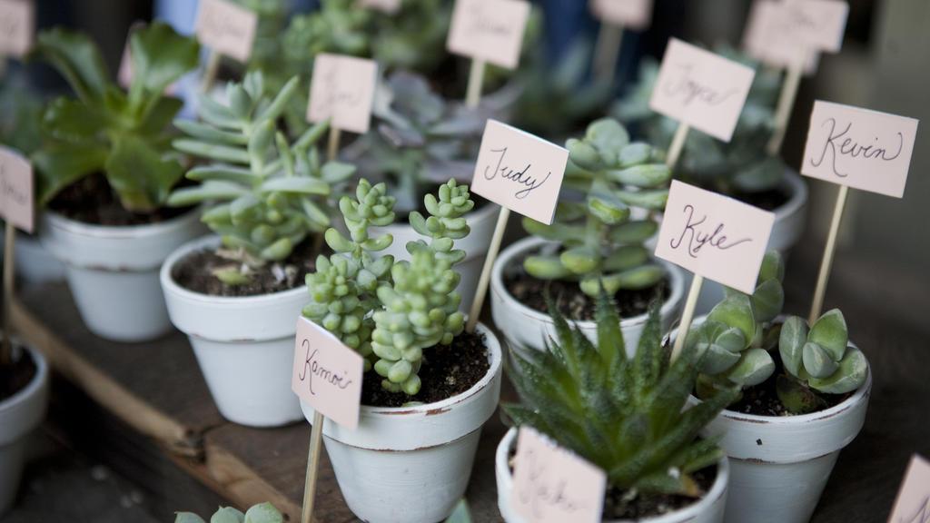 DIY-Hochzeit-Tischkarten: Sukkulenten oder Kakteen auf den Tisch.