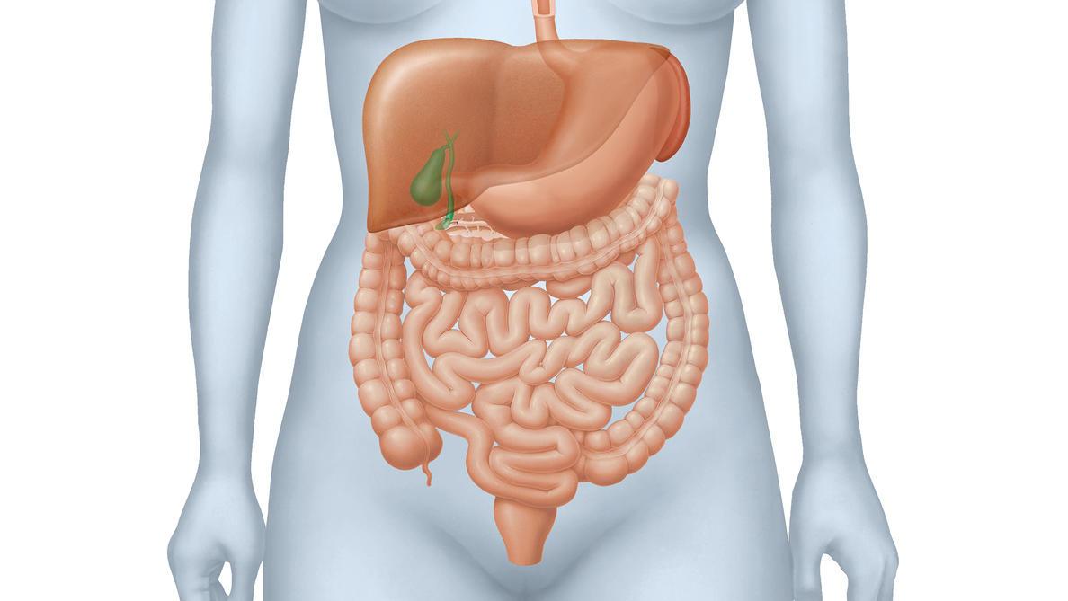 Der Dickdarm gliedert sich in mehrere Abschnitte wie Kolon und Sigma-Darm