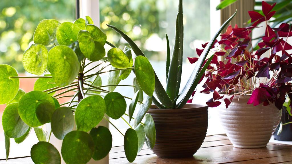 Mineralwasser tut Zimmerpflanzen gut