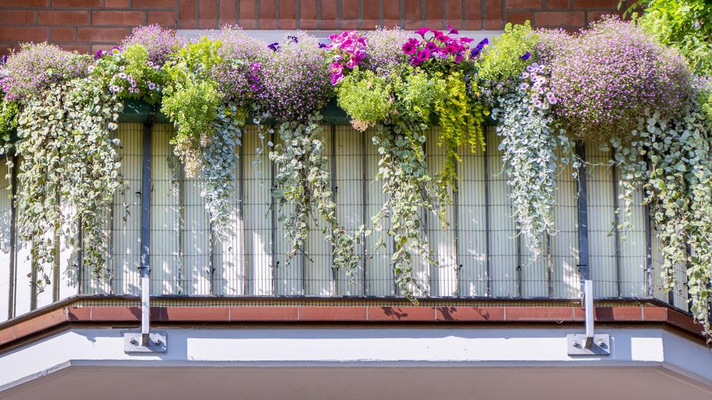 Pretty balcony plants