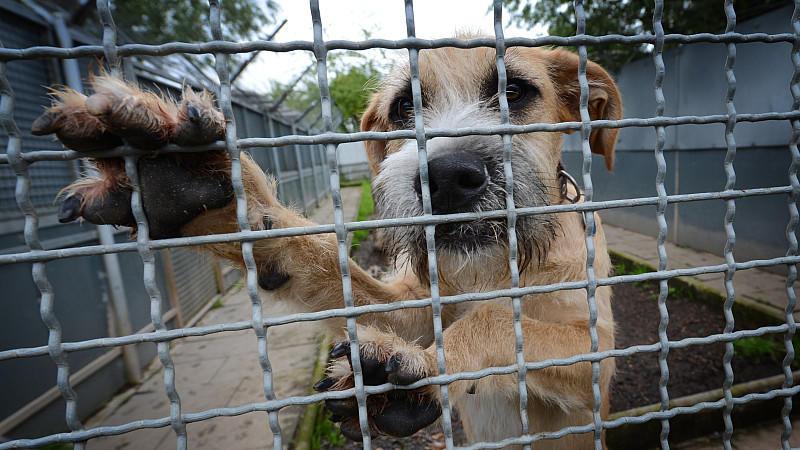Ein Hund wartet auf ein neues Zuhause
