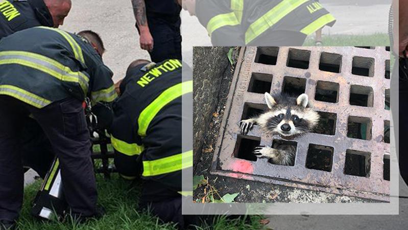 Die Rettung des Waschbären gestaltete sich als schwierig.