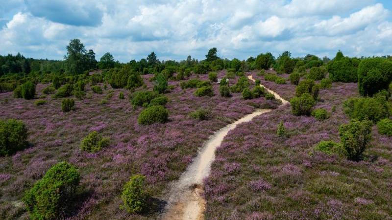 Zum Wandern lädt neben dem Harz auch die Lüneburger Heide ein.