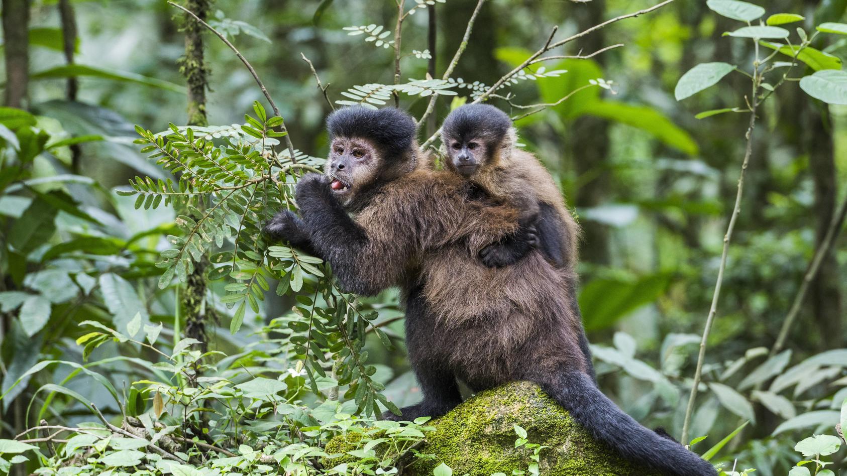 Amazonas-Brände vernichten den Lebensraum vieler Tier- und Pflanzenarten.