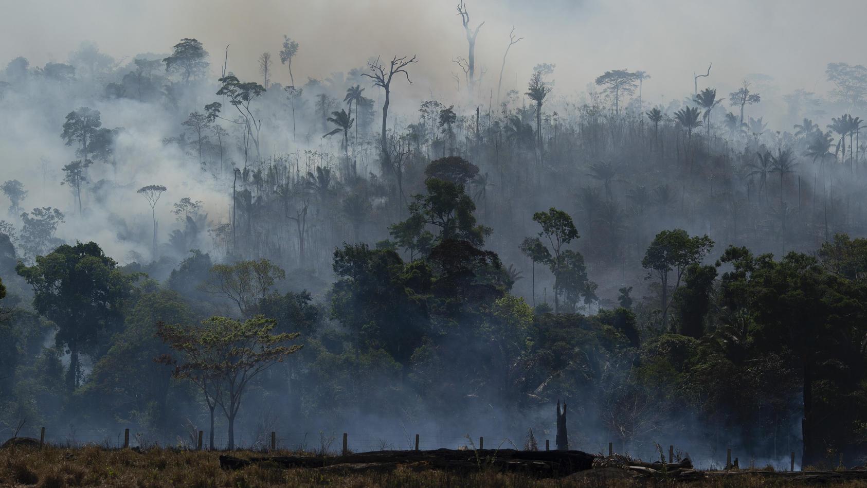 Waldbrand im Amazonas: Für Fleisch - und Autositze?