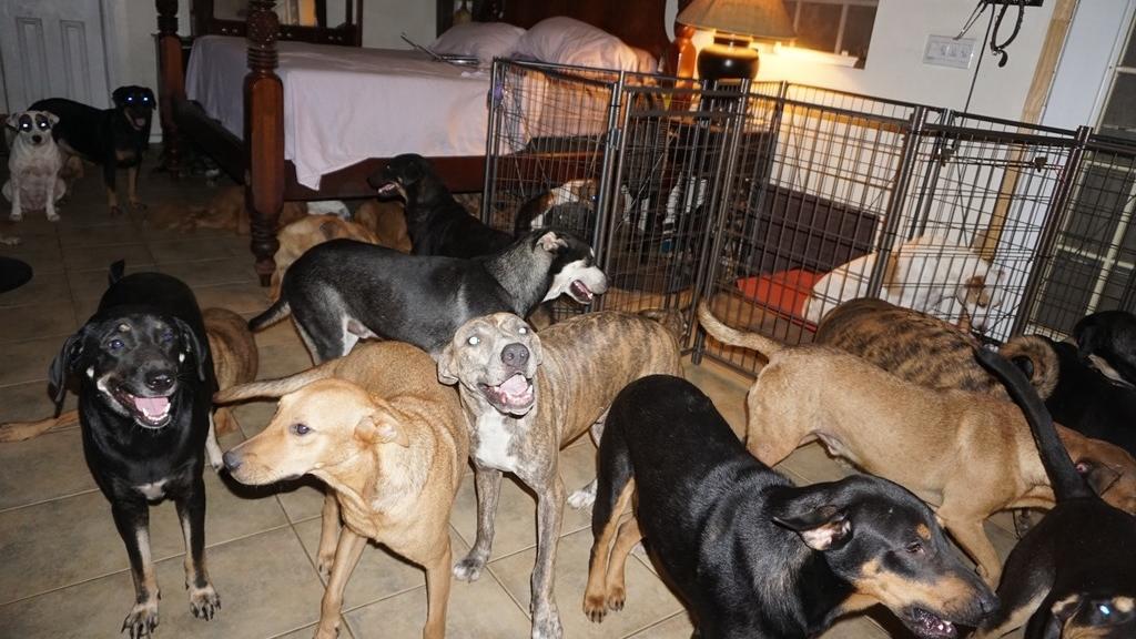 Chella Phillips nahm insgesamt 97 Straßenhunde bei sich auf. Nur auf ihr Bett durften die Tiere nicht.