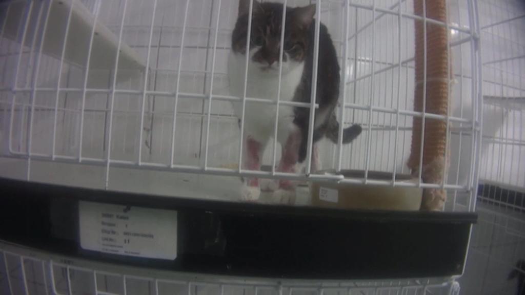 Versuchslabor bei Hamburg: Der Soko Tierschutz und der Organisation Cruelty Free International gelang es, einen Undercover-Ermittler in das abgeschottete Tierversuchslabor LPT in Mienenbüttel einzuschleusen.