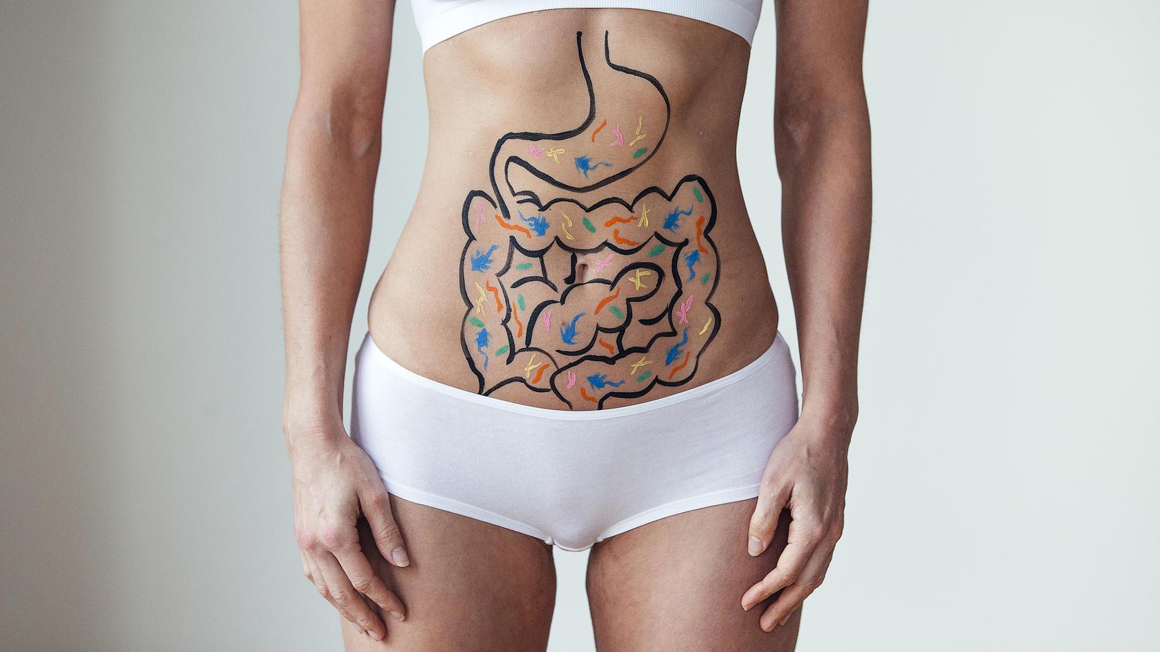 Der Magen ist ein Hohlmuskel und innen mit einer Schleimhaut ausgekleidet