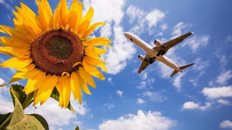 Eine ungemütliche Frage: Klima oder Flugreise?