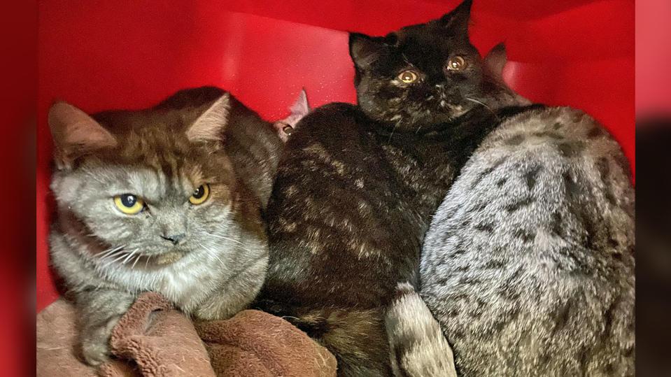 Köln-Dellbrück: Tierheim rettet 48 Katzen aus Tiermessie-Wohnung