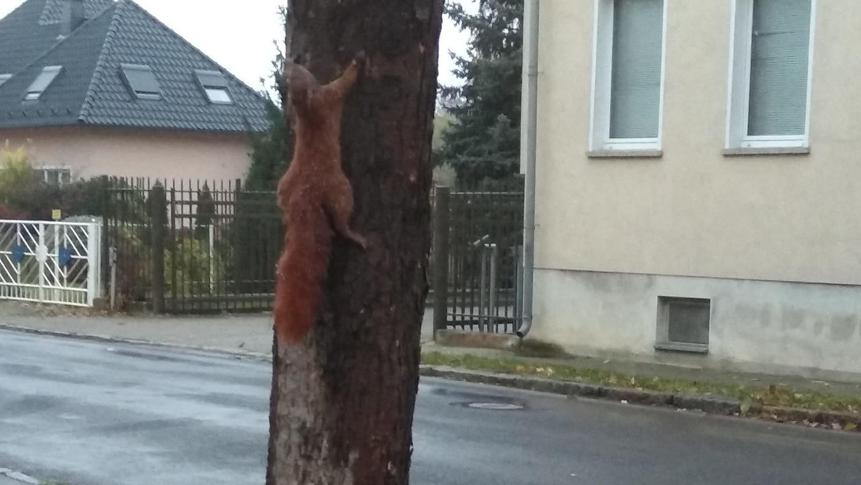 Schockierendes Foto aus Bad Liebenwerda: Eichhörnchen an Baum genagelt