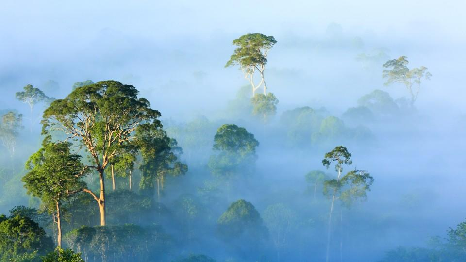 Am frühen Morgen liegt Nebel über dem Regenwald, Danum-Tal. Sabah, MalaysiaDie Verwendung des sendungsbezogenen Materials ist nur mit dem Hinweis und Verlinkung auf TVNOW gestattet.