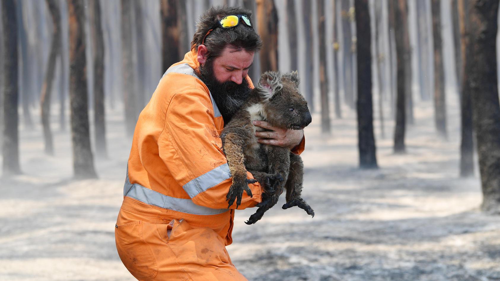 Menschen helfen den Tieren in Not, doch oftmals waren es Menschen, die die Not erst herbeigeführt haben.
