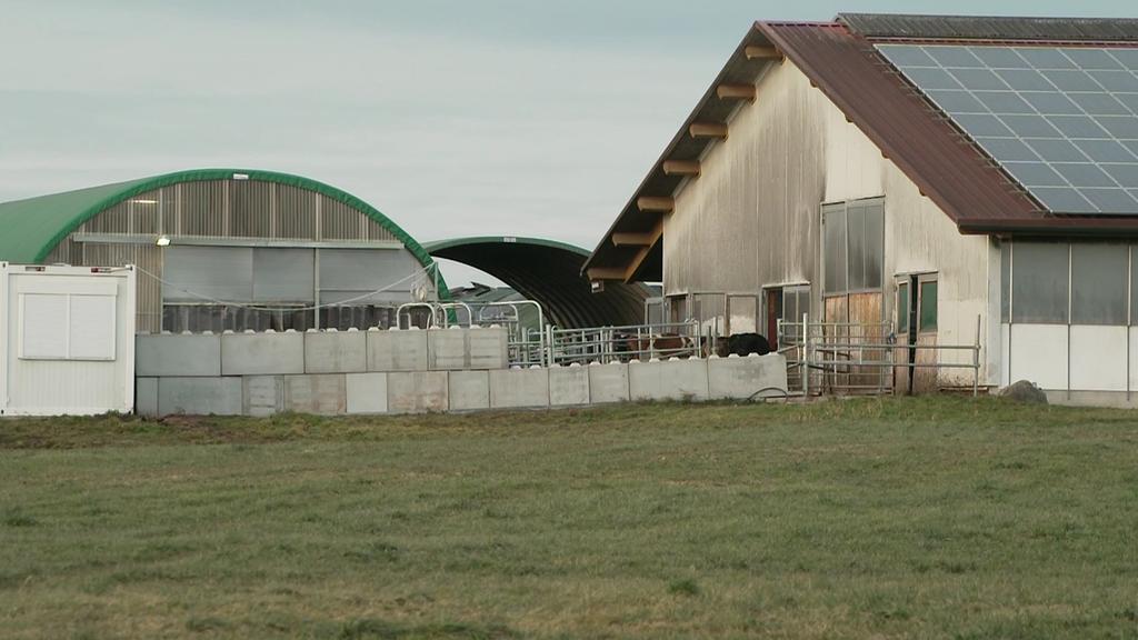 Tierhaltungsskandal auf Milchviehhof im Allgäu