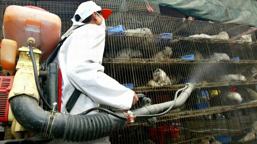Ein Arbeiter desinfiziert am 6.1.2004 auf einem Wildtiermarkt in Guangzhou Käfige mit Larvenrollern. Der aktuelle bestätigte Sars-Fall ist nach Angaben von Wissenschaftlern möglicherweise auf Wildtiere zurückzuführen, die in Südchina als Delikatesse