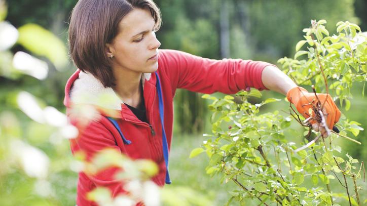 Corona-Krise für die Gartenarbeit nutzen