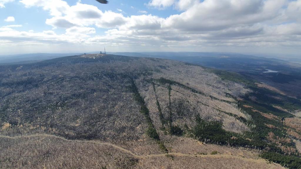 Der Wald rund um den Brocken sieht schon sehr ausgetrocknet aus.