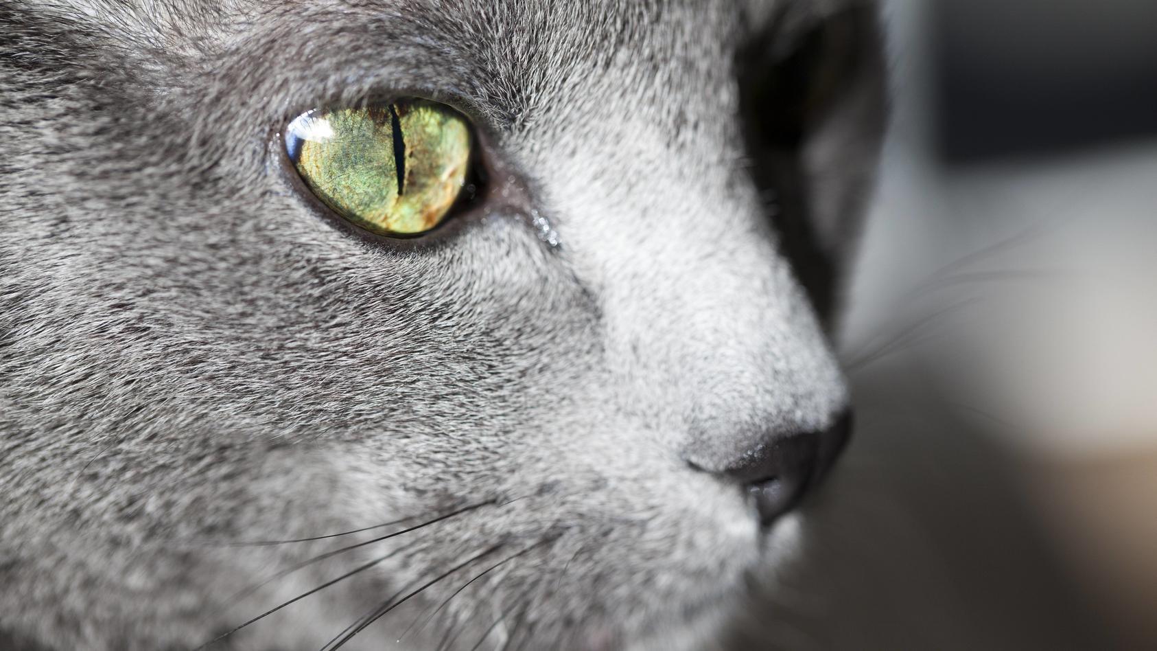 Können sich auch Hunde und Katzen mit dem Coronavirus infizieren und diesen dann übertragen? (Symbolbild)