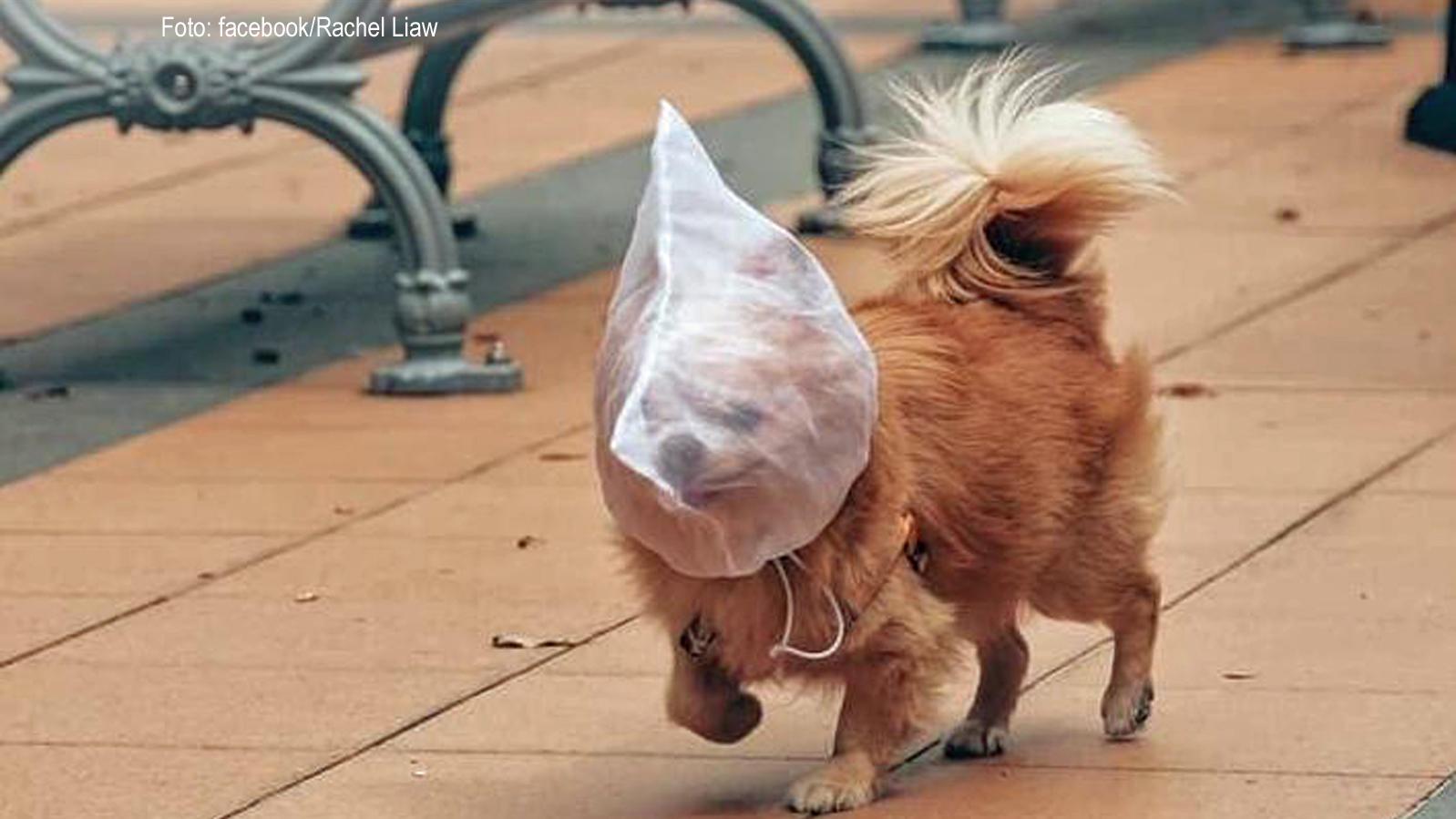 Hund Hat Warmen Kopf