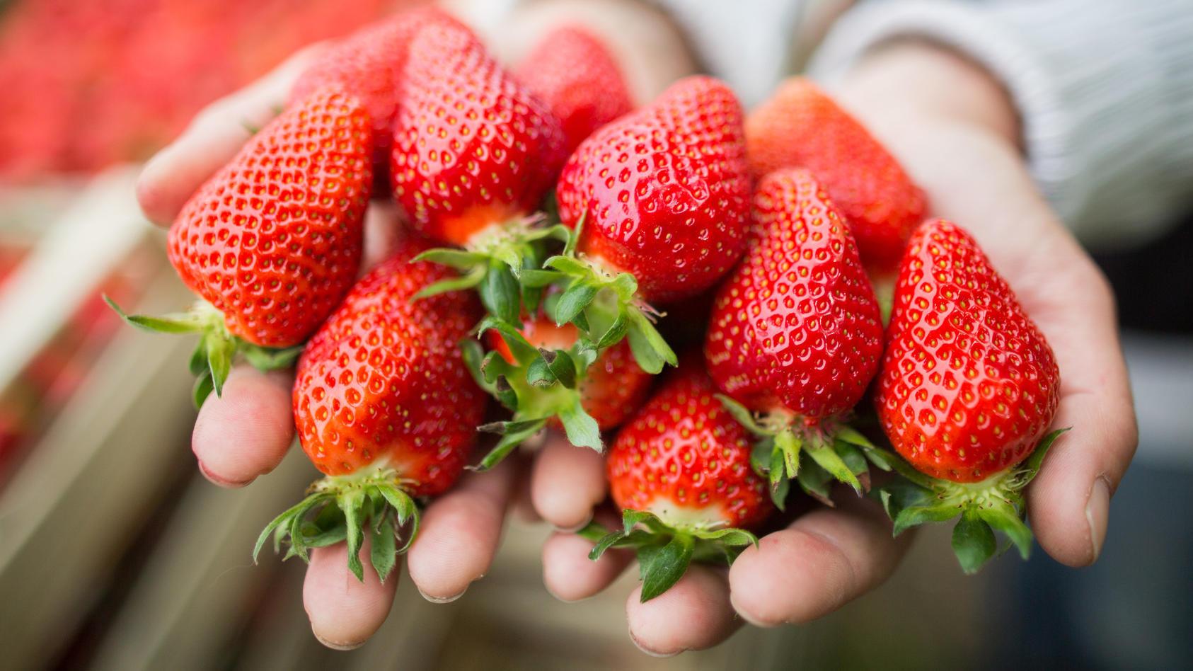 Erdbeeren Richtig Lagern