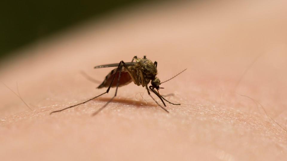 Das nervt und kann wehtun: Diese Mücke will Blut.