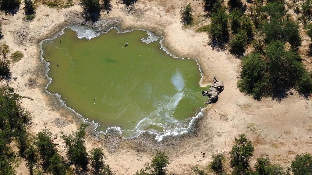 Wasserloch in Botswana