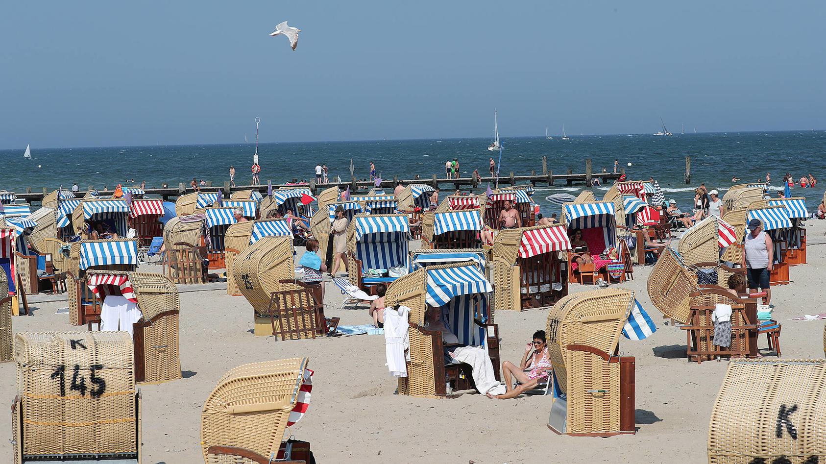 Unangenehm kann für Urlauber an Nord- und Ostsee: eine Begegnung mit der Gelben Haarqualle.