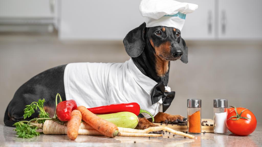Hund in der Küche: Dackel als Koch verkleidet liegt neben Gemüse