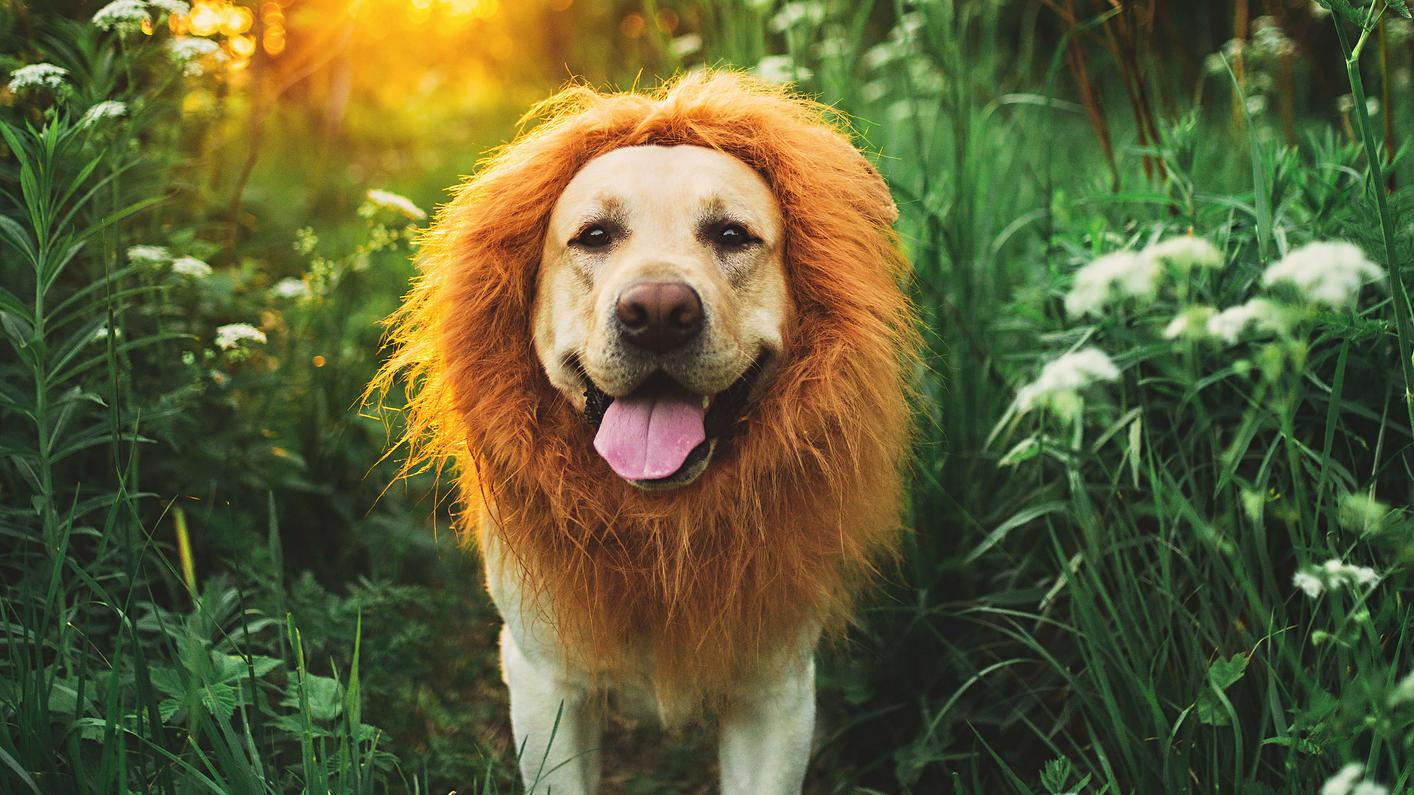 Sternzeichen prägen das Wesen von Hunden genauso wie das von Menschen. Löwen etwa sind stolz und voller Lebensfreude.