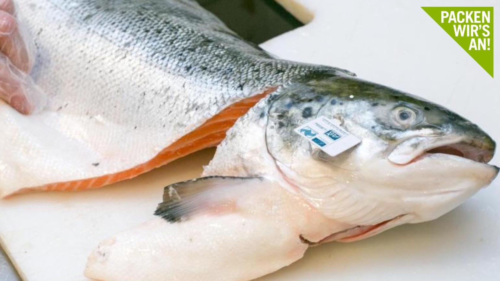 Lachs mit Bio-Siegel ist Experten zufolge eine gute Wahl: Hier können Verbraucher darauf vertrauen, dass bestimmte Standards beimFischfang eingehalten wurden. Foto: Karolin Krämer