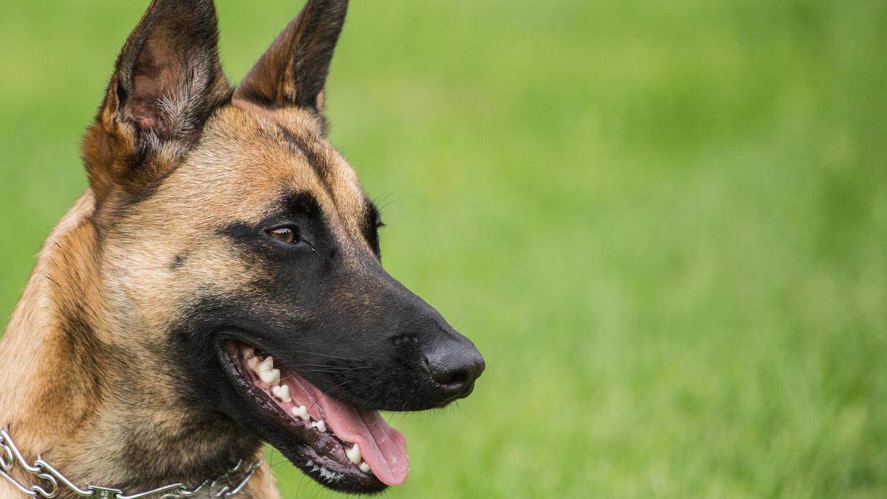 """Als der Hund einen Polizisten ansprang, erschossen die Beamten das""""hochgradig aggressive"""" Tier mit mehreren Schüssen, so die Polizei."""