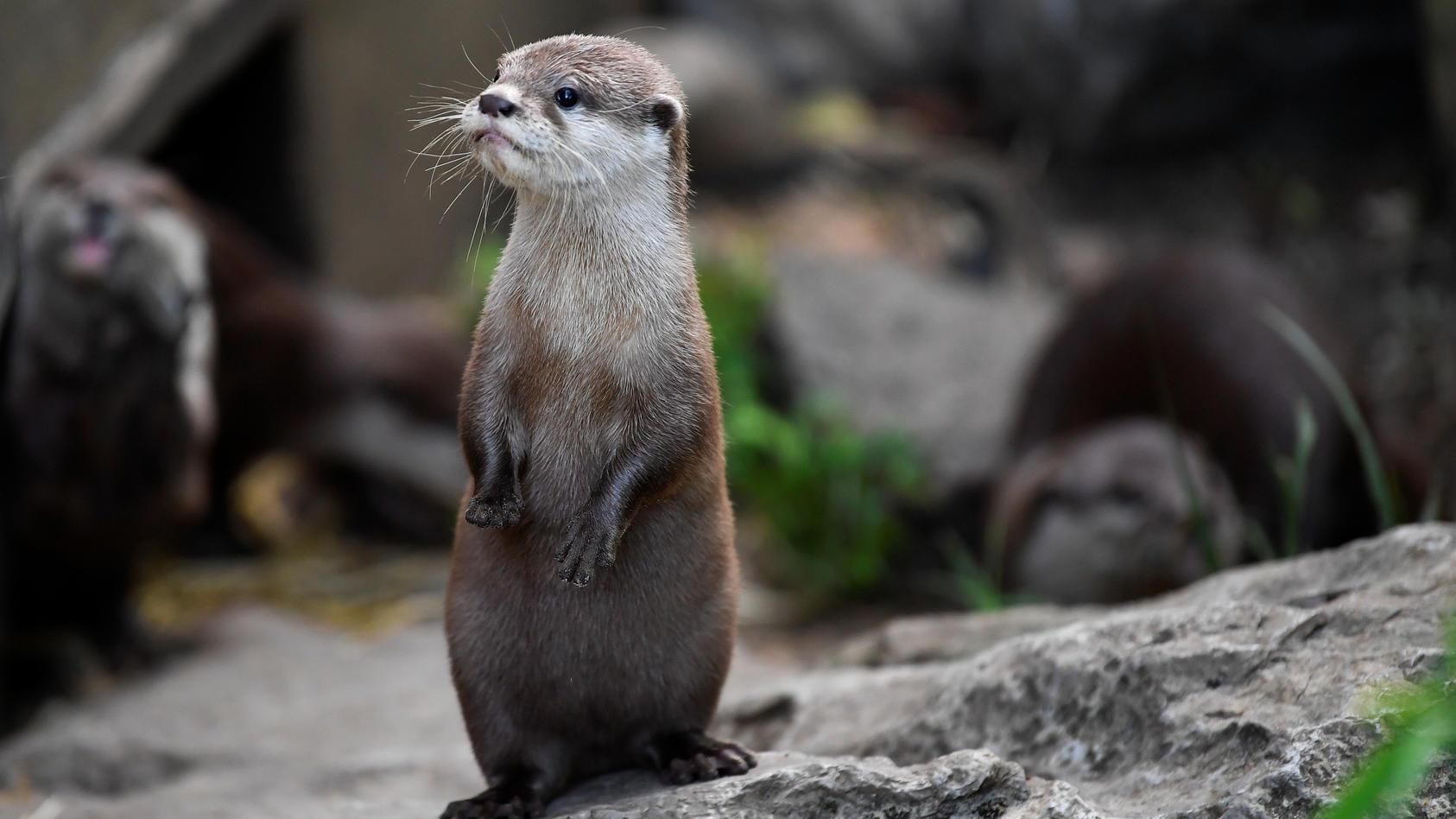 Was ist mein Krafttier? Otter, Eule, Schlange und Co. werden im indianischen Horoskop den verschiedenen Geburtsmonaten zugeordnet.