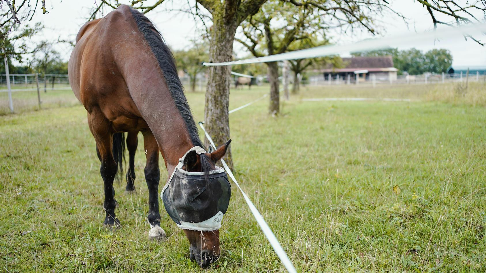 Tierquäler verletzen Pferde in der Rhein-Neckar Region.