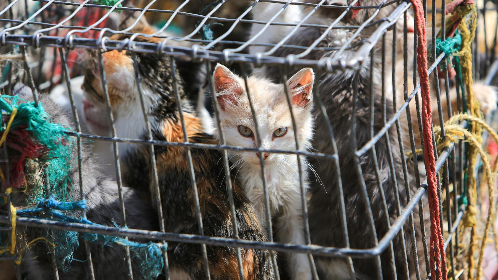 Katzen gelten in Vietnam als Delikatesse.