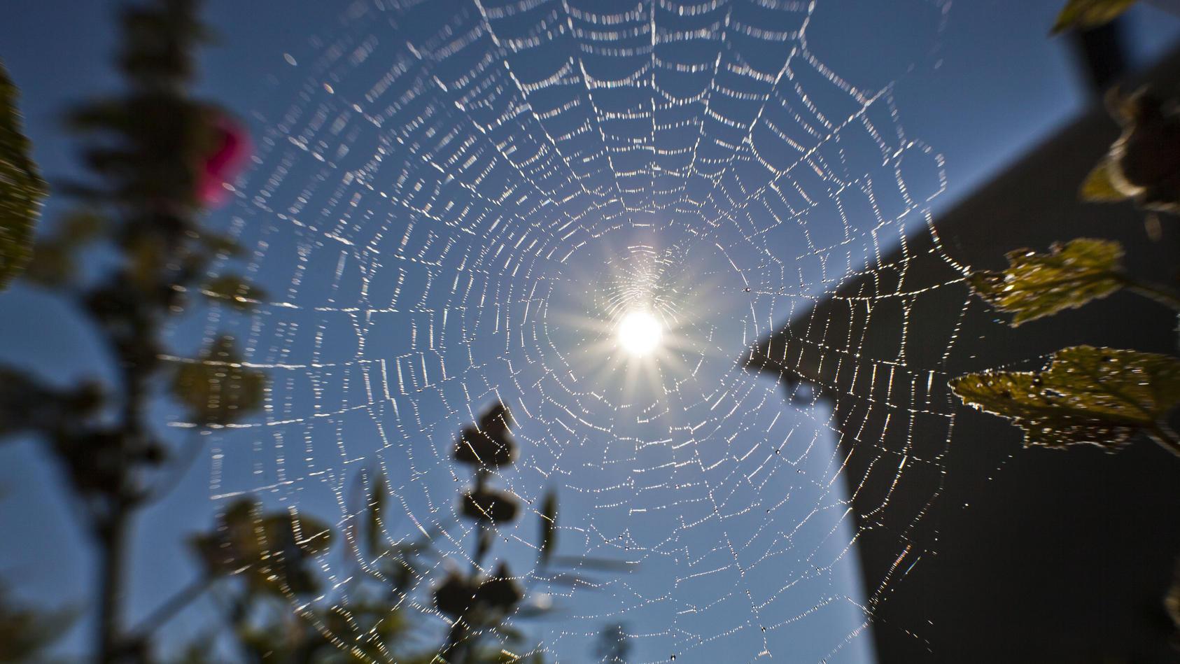 Spinnennetz im Sonnenschein