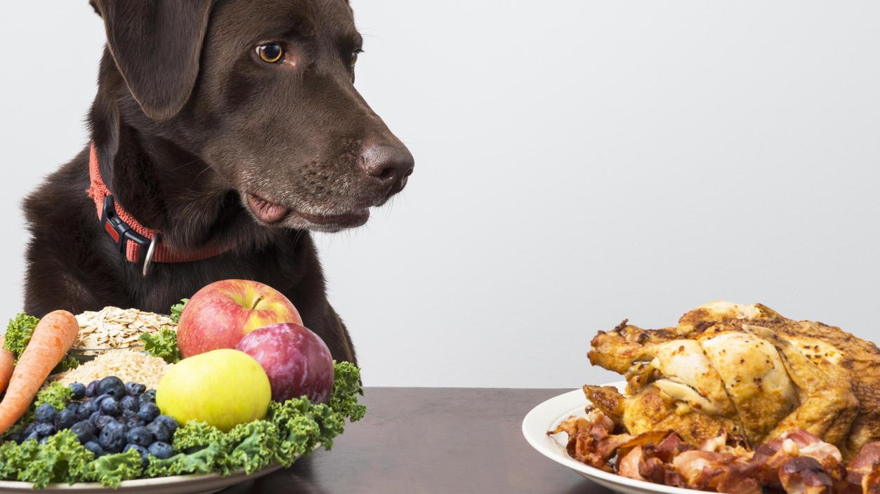 wer-zum-vegetarier-oder-veganer-wird-mochte-oft-dass-das-haustier-die-ernahrungsweise-ubernimmt-doch-ist-das-uberhaupt-gesund-fur-hunde