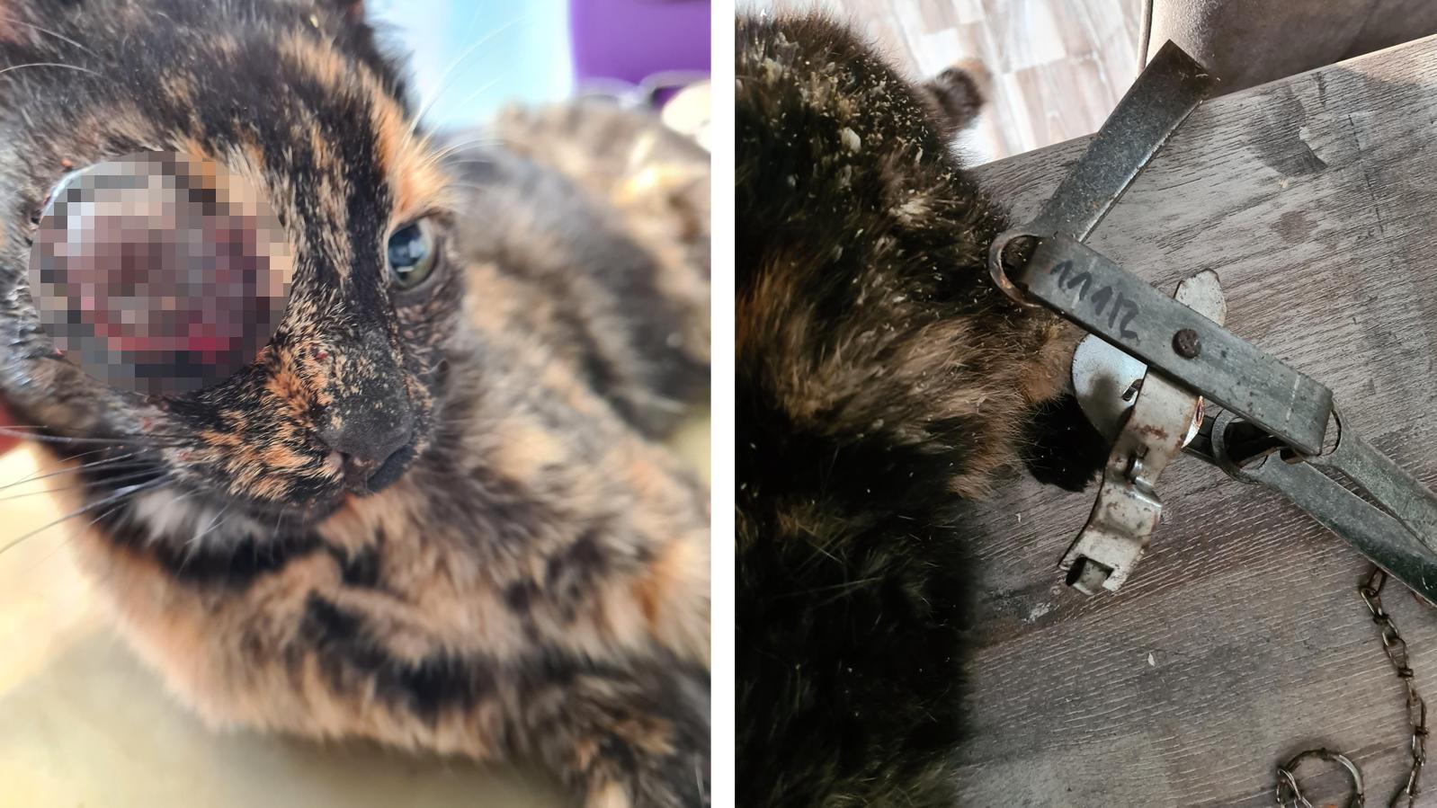 Katze Fey trug viele Verletzungen davon. Ihr musste unter anderem ein Auge entfernt werden.