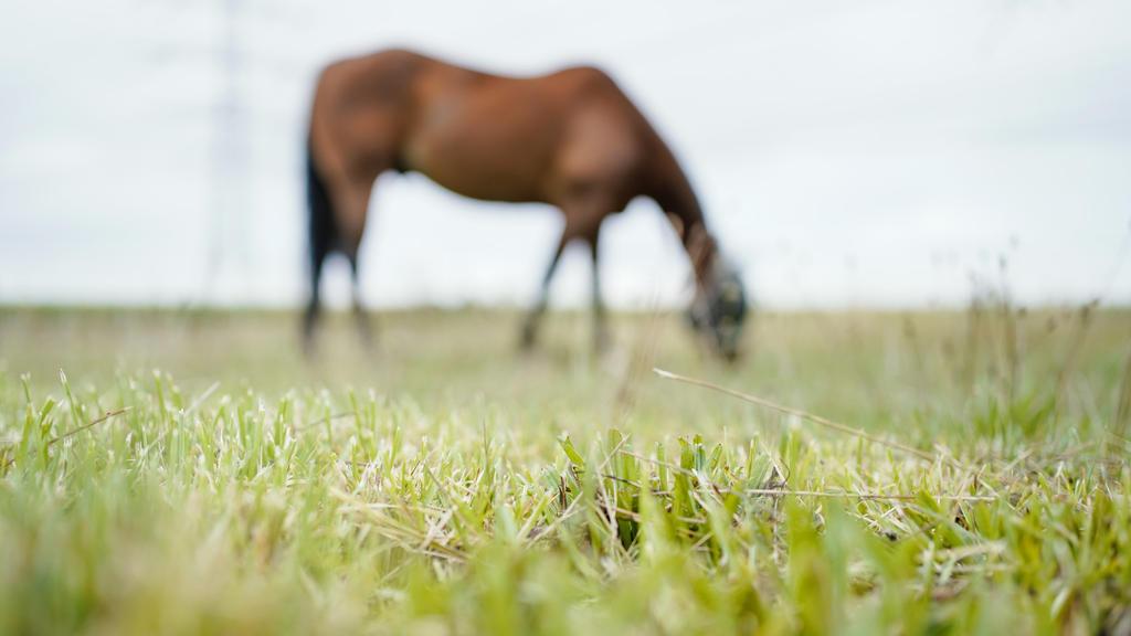 ARCHIV - 31.08.2020, Baden-Württemberg, NA: Ein Pferd steht auf der Weide eines Pferdehofes. (zu dpa «Pferd mit schweren Verletzungen tot auf Koppel entdeckt») Foto: Uwe Anspach/dpa +++ dpa-Bildfunk +++
