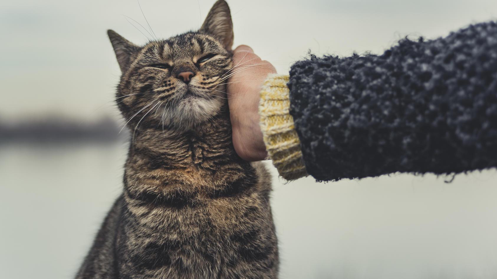 Britische Forscher haben entdeckt, welche Geste Katzen wie ein Lächeln deuten
