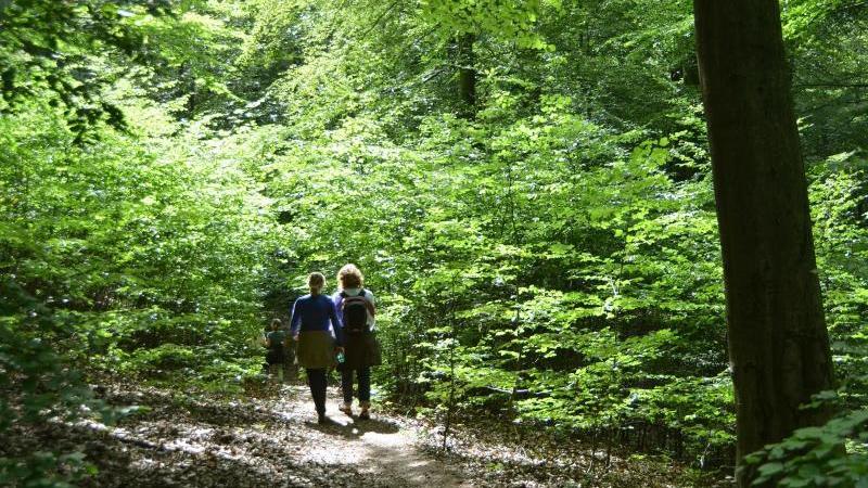 Zwei Frauen wandern durch den Wald. Foto: Uwe Zucchi/dpa/Archiv