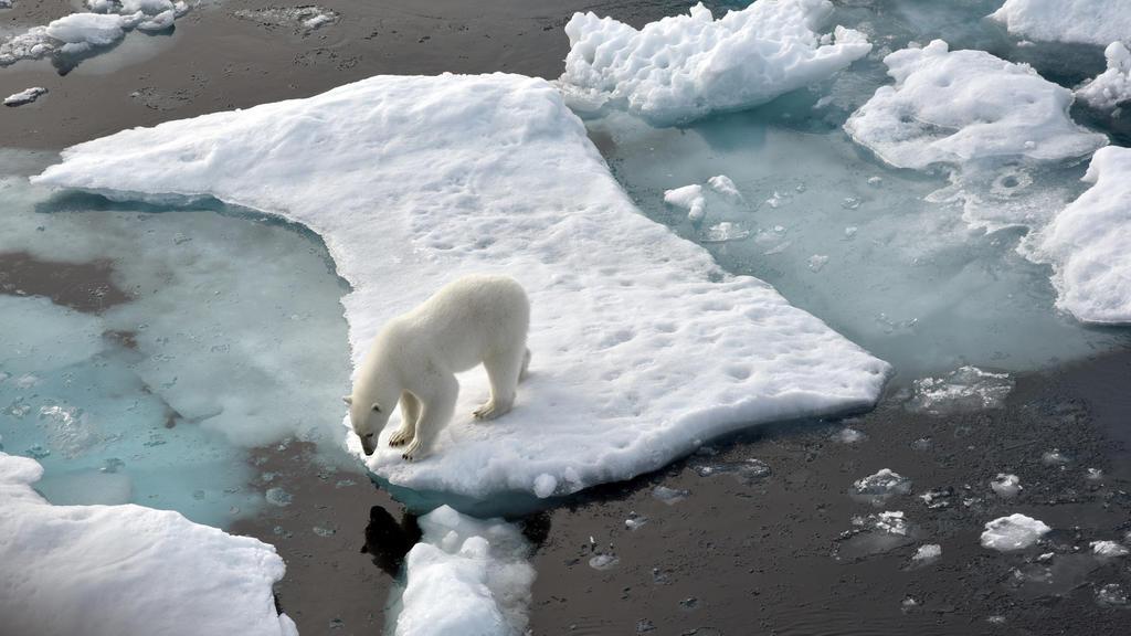 Ein Eisbär steht auf einer Eisscholle im Nordpolarmeer. Der Klimawandel macht den Lebensraum der Eisbären immer kleiner.