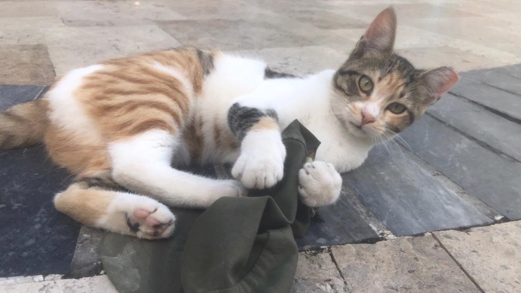 Scheinbar haben Katzen alle Zeit der Welt. Griechische Katzen haben auch anscheinend alle Zeit der Welt.